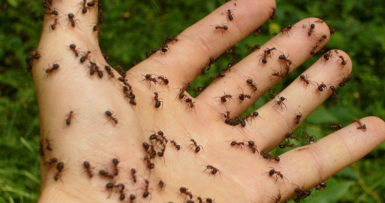 10 starke Hausmittel gegen Ameisen