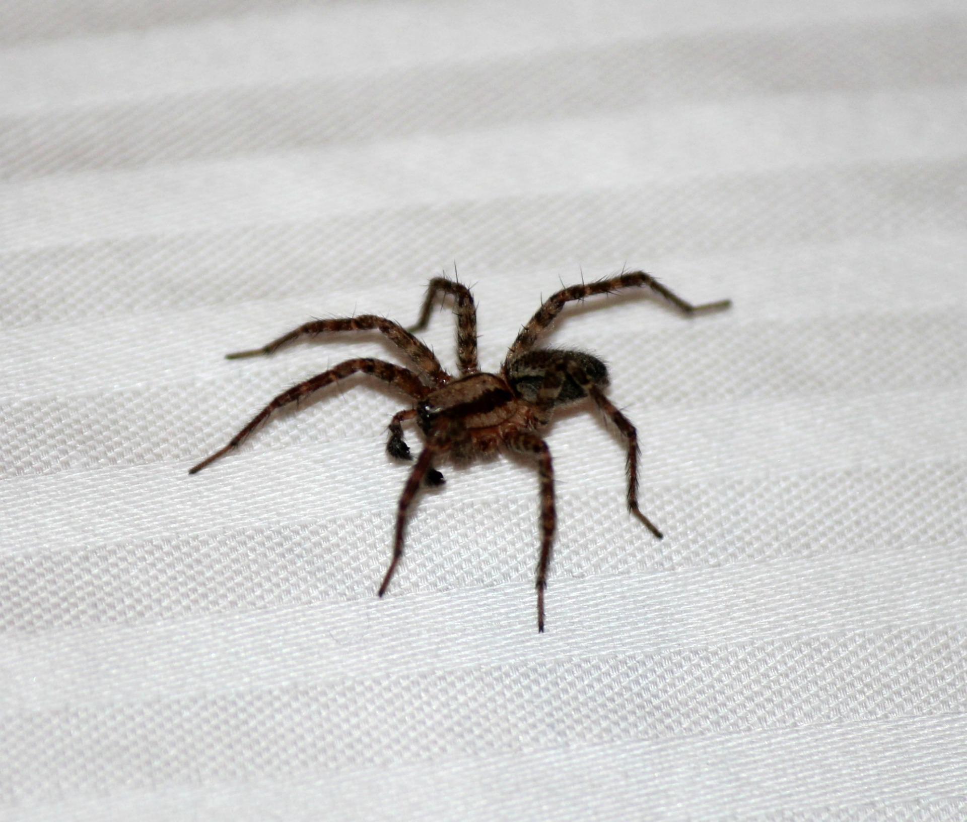 10 Möglichkeiten, Spinnen endgültig ohne Chemikalien zu befreien